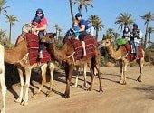 Marrakech-camel-rides-palmeraie-min